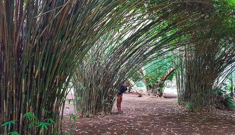 ايضا توجهت الى الحديقة النباتية Sir Seewoosagur Ramgoolam