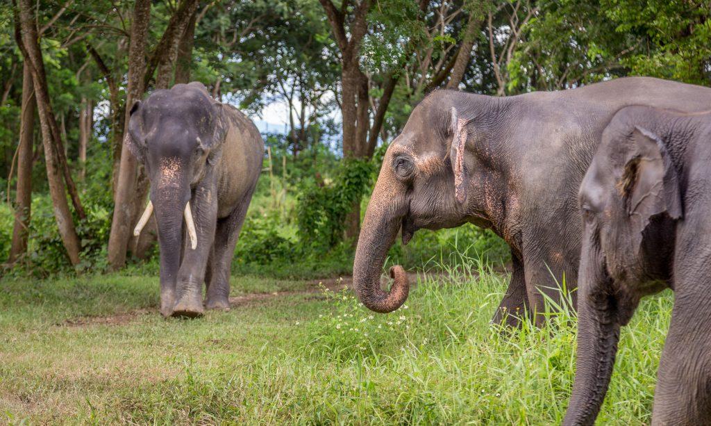 وادي الفيل في تايلند