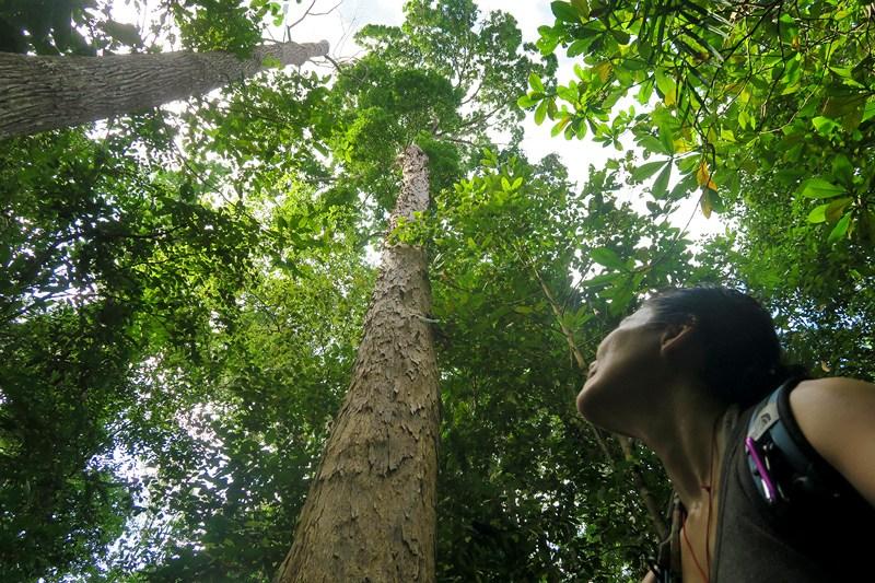 غابات حديقة باكو