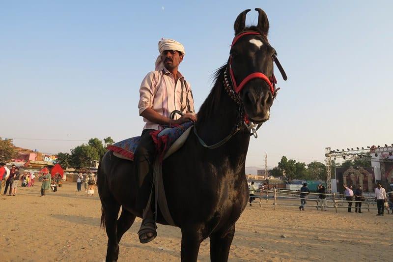 معرض الابل والخيول في بوشكار